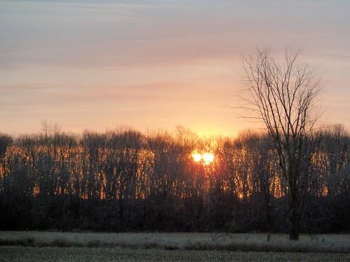 trees sunrise barrhaven