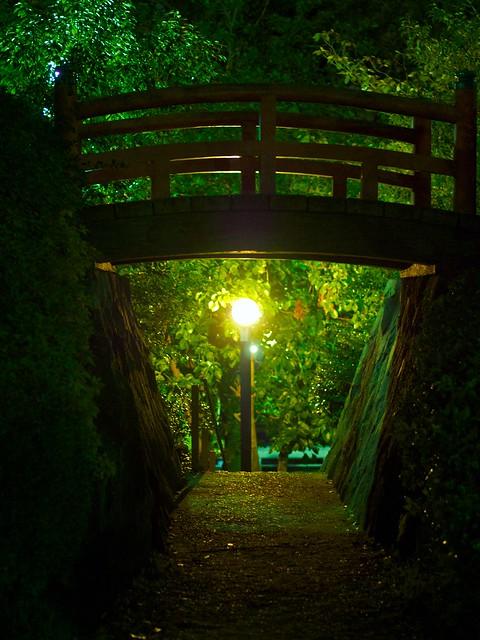 140329_NightSakura 6