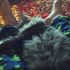 What #cats think humans are for. #iphoneography #ig #instacats