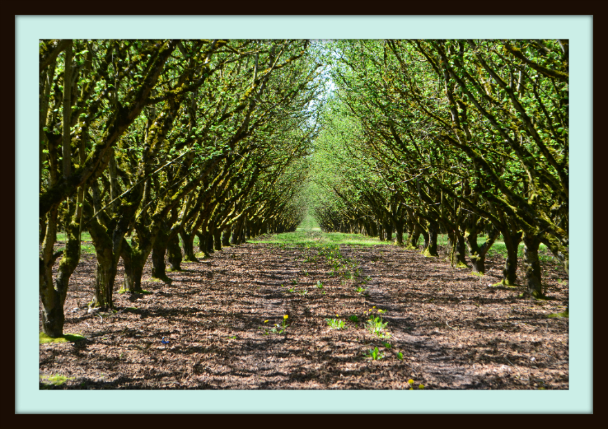 orchard_framed