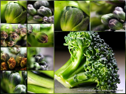 114: Vegetable. by pvera