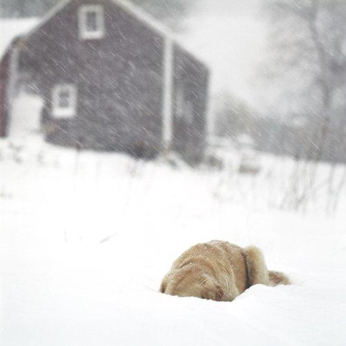 Cig Harvey, Scarlet in the Snow, Rockport, Maine, 2009