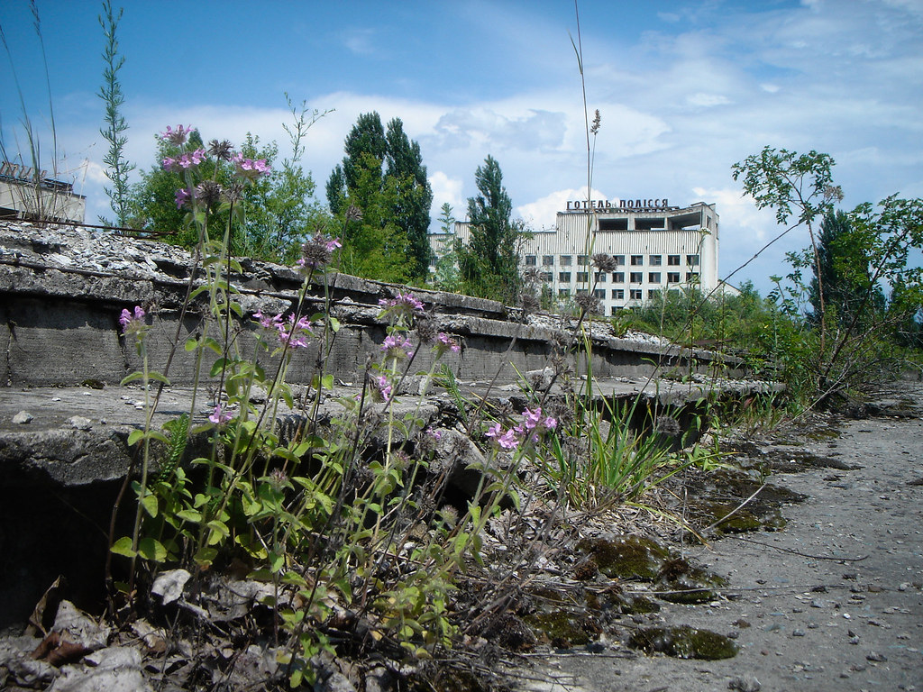 Wildflowers and moss grow on the stairs of Pripyat's town plaza. A city of nearly 50,000 people, Pripyat was evacuated after the Chernobyl nuclear disaster, and remains empty today. www.visitsunnychernobyl.com