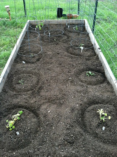 new bed 3 original tomatoes and summer sq