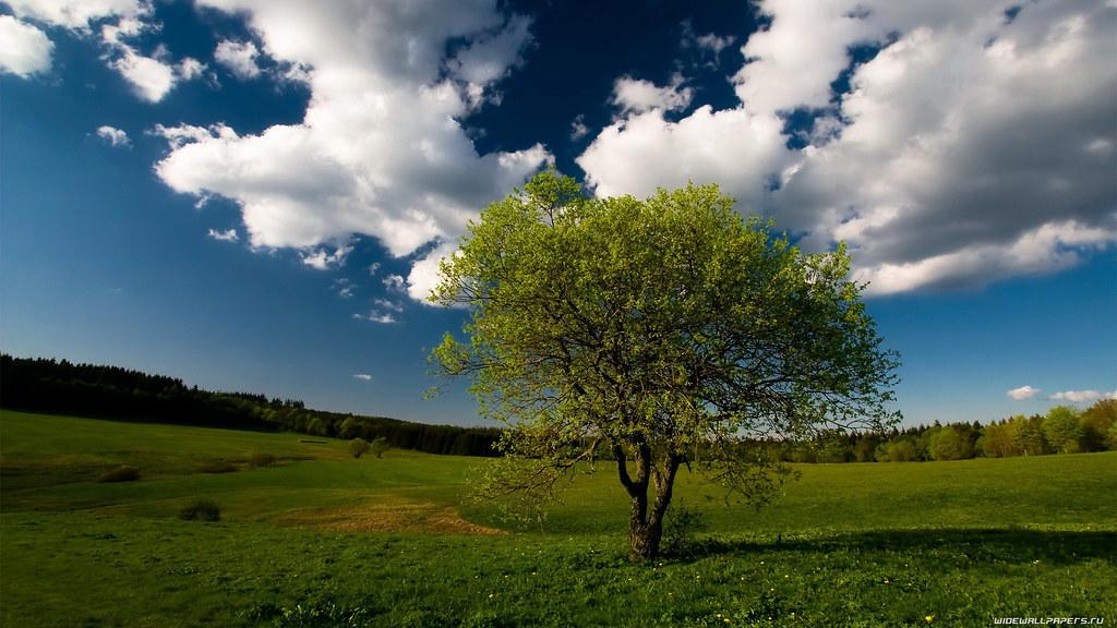 Nature Wallpaper 1600x900 028 Sangram Chaudhuri Flickr