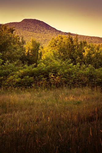 mont champ pinacle dorée splittoning traitementcroisé