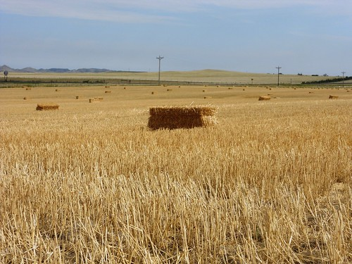 Bales from the straw