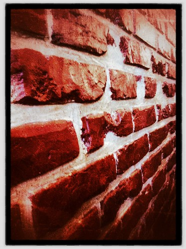 Against a brick wall. Day 175/366.