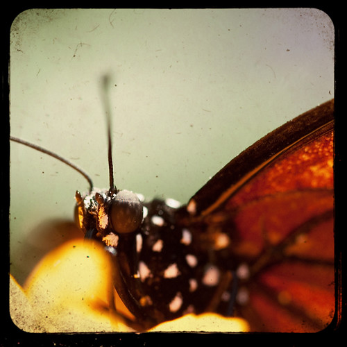 Monarch Portrait by The Shutterbug Eye™