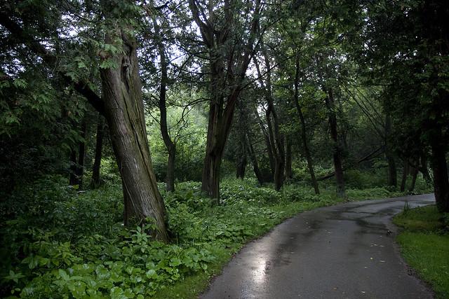 cedar grove path
