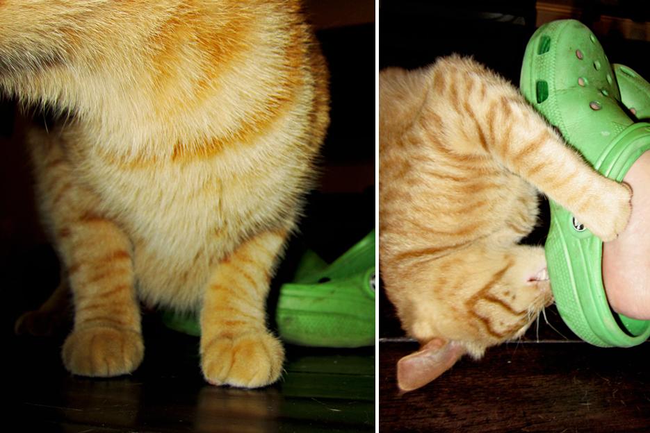 071312_cats02