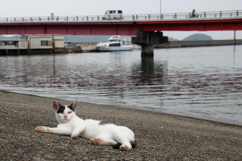 加太港の野良猫