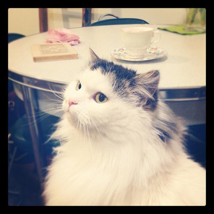 laneway_esme instagram Babycat