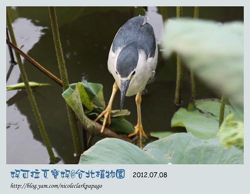 台北植物園7