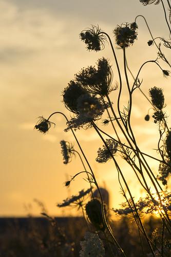 road sunset portrait sky usa flower nature silhouette wisconsin photography weeds glow image pentax dusk country photograph 2012 k5 kohlbauer hardpancom marckohlbauer