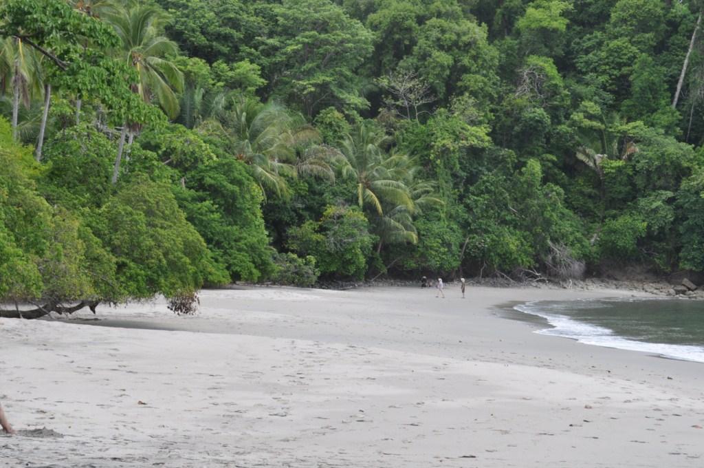 Playas del Parque Nacional de Manuel Antonio en Costa Rica Parque Nacional Manuel Antonio en Costa Rica, el más pequeño y más popular - 7734667650 689802040e o - Parque Nacional Manuel Antonio en Costa Rica, el más pequeño y más popular