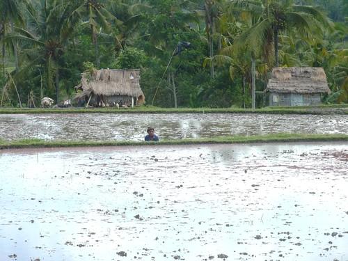 Bali- Ubud-Rizières (10)