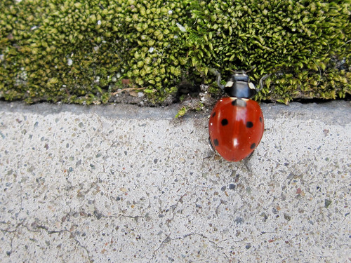 Ladybug: To cross or not to cross?