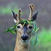 A Real Party Animal - Whitetail Buck