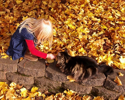 Little girl a kitty and leaves 11 8 2012