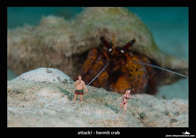 UW attack - hermit crab