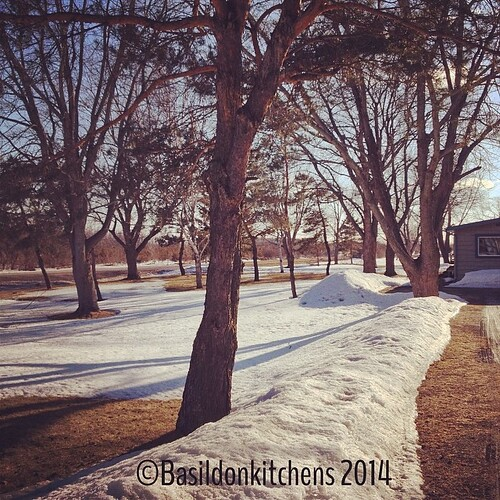 23/3/2014 - bonza {Bonza weekend, mates!!! Spring in here; lots of snow melted; grass showing thru} #photoaday #spring #snow #melting #sunshine #princeedwardcounty
