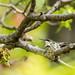 Hummingbird on nest-2671