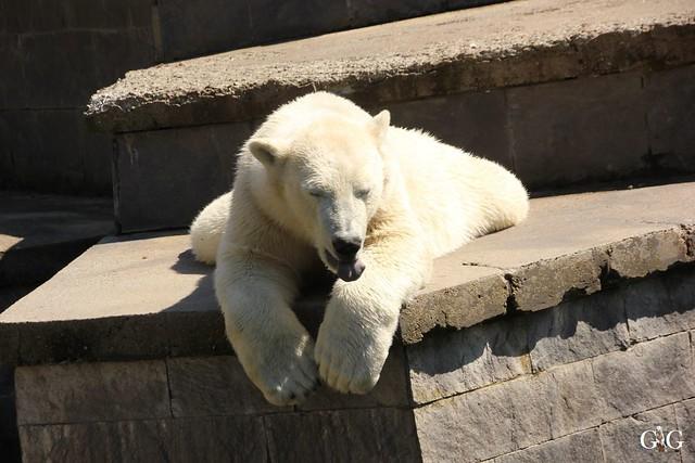 Besuch Zoo Rostock 07.05.201688