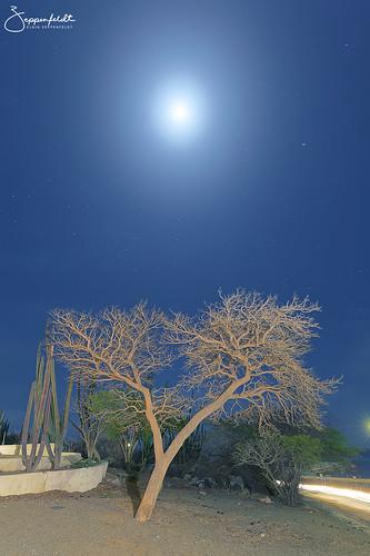 night moon tree aruba light painting sero colorado nightphotography stars mars sagittarius scorpio constellation canoneos6d dxopro sagittariusteapot landscape bluesky blue cactus lighttrail scorpius