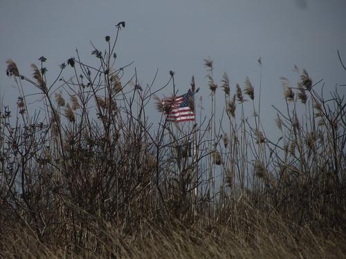 flag through reeds