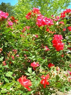 Frelinghuysen Arboretum Garden 2