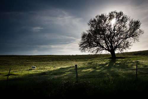 dog tree shepherd albero controluce pastore abruzzese maremmano rignanoflaminio mygearandme mygearandmepremium mygearandmebronze mygearandmesilver mygearandmegold