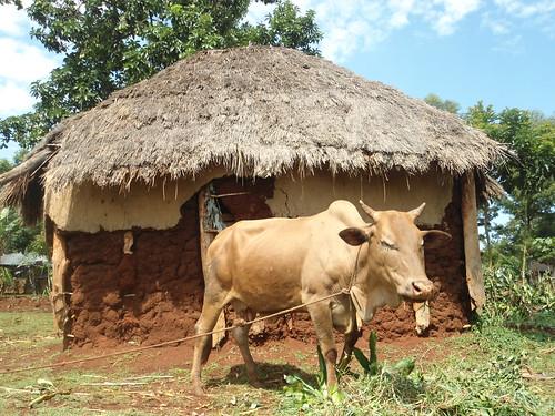 189_kenya_Nanyingi