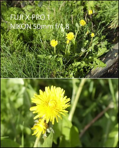 Fuji X-Pro 1 Nikon 28mm f/2.8D