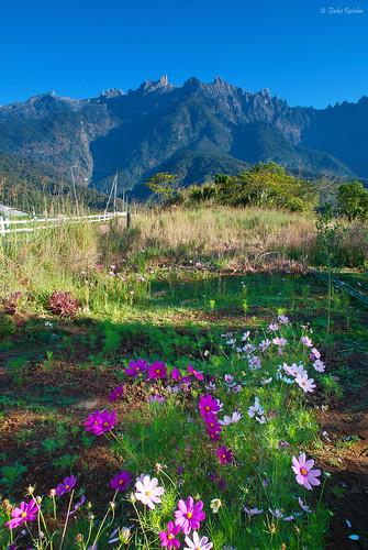 Tinggi - Tinggi Gunung Kinabalu by Zackri Zim'S™