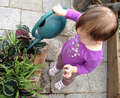 baby bear hugs with a watering can watering plants for earth day