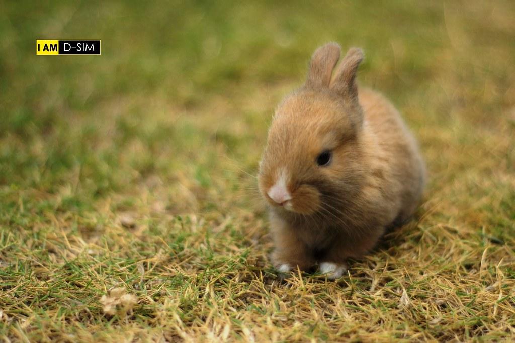 Baby Rabbit (16)