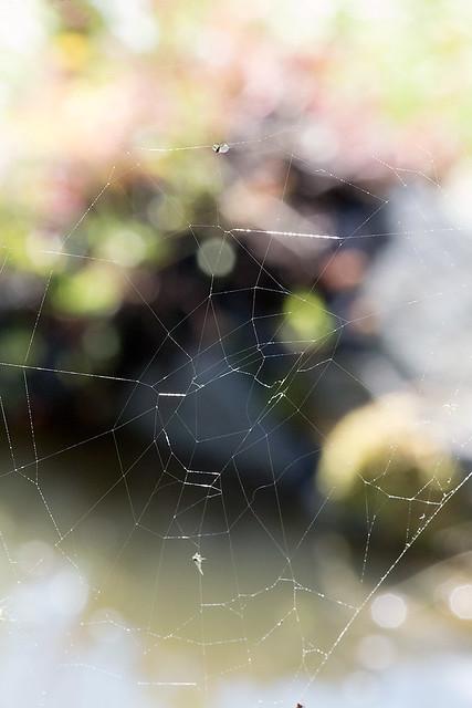 Spindelnät
