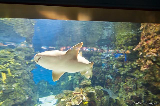Aquarium - shark