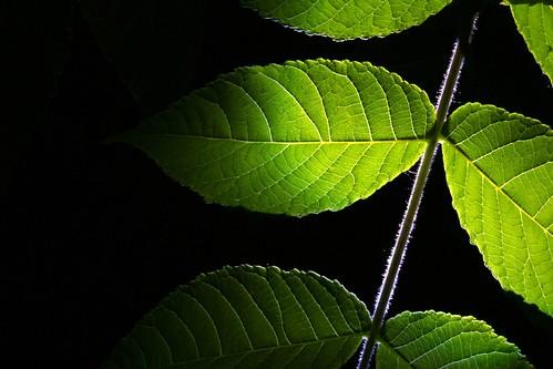 無料写真素材, 花・植物, 葉っぱ