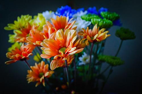 crazy daisies 2.0