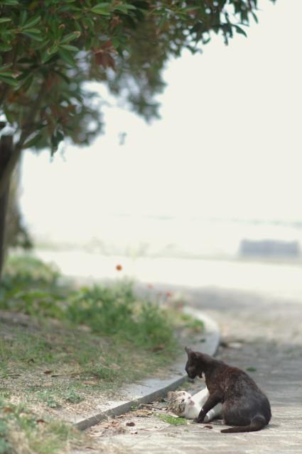cat (29)
