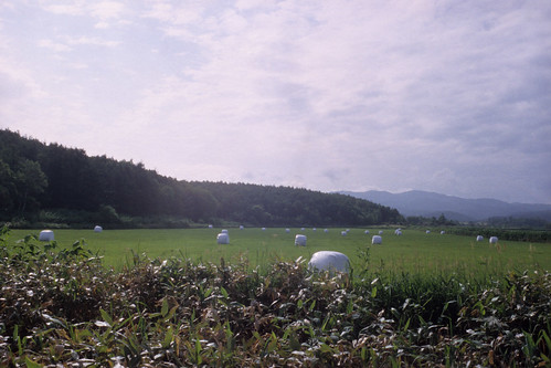 20120703009chikoma.jpg