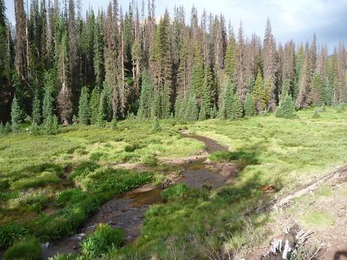 La Vaca creek