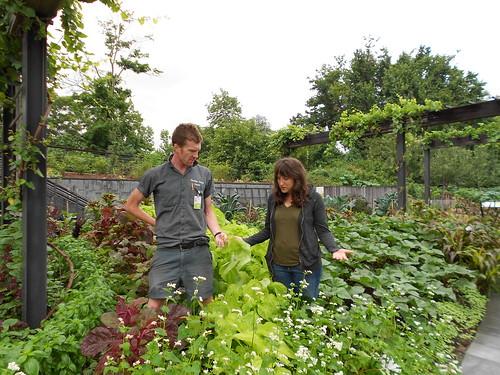 Amaranth in the Herb Garden