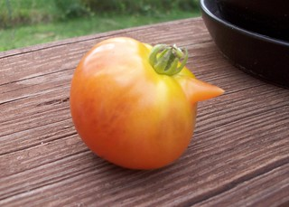 Tomatoes_72012
