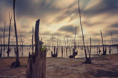 trees tree water landscape growth stump deadwood manasqaunreservoir