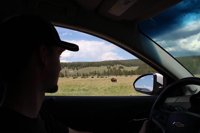 Au revoir cher bison