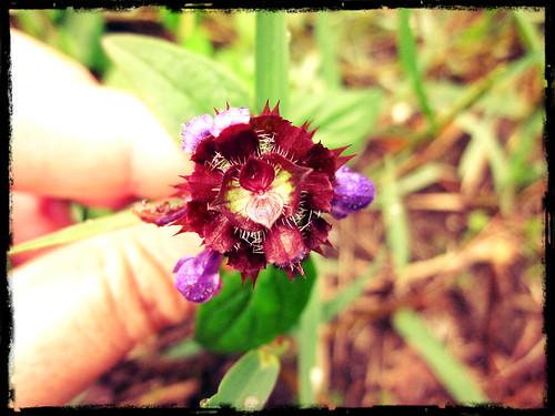 FlorCoração