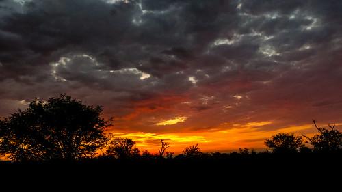 africa southafrica safari madikwe